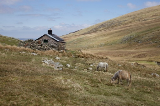 Wild ponies near the bothy at Dulyn.