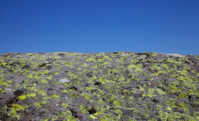 Lichen on a boulder