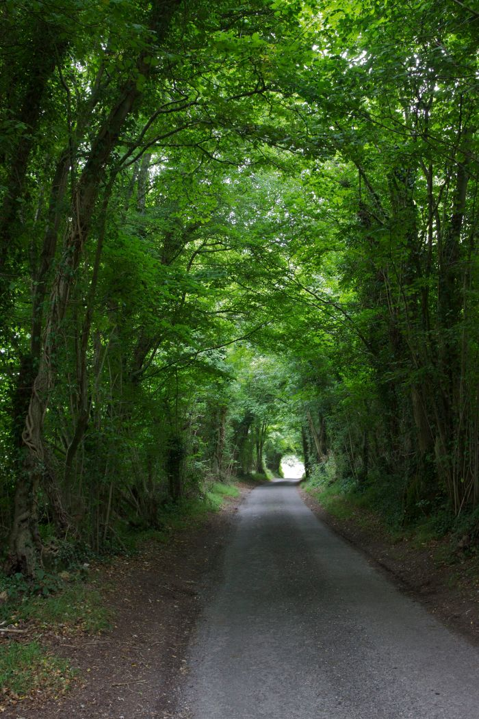 The road to Up Marden