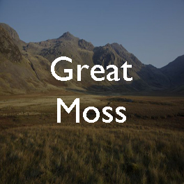 11 Great Moss copy