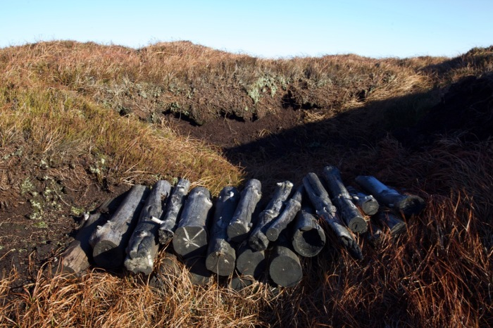 Logs placed in one of Bleaklow's grouphs to mitigate erosion